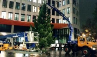 Der Weihnachtsbaumwahnsinn