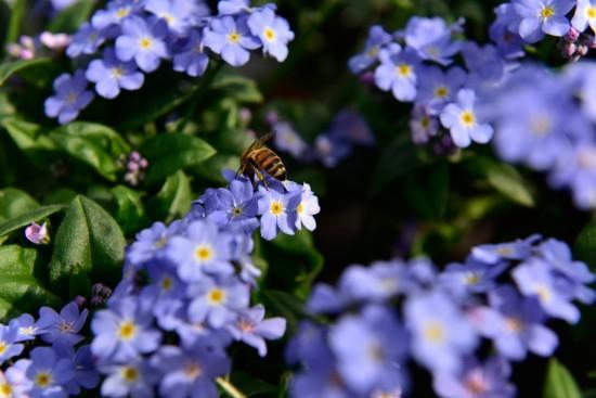 Nektarweiden für Balkon und Terrasse – Gutes für Bienen tun