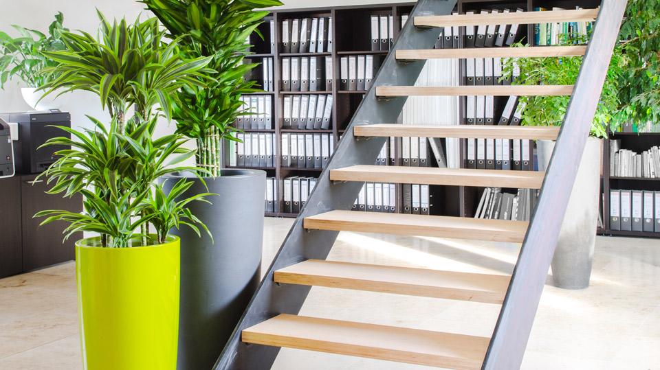 Pflanzen im Büro: grüner Mehrwert für Körper und Geist