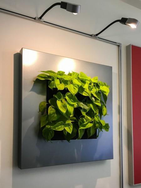 Blätterwerk statt Picasso: Lebende Pflanzenbilder verschönern die Wand
