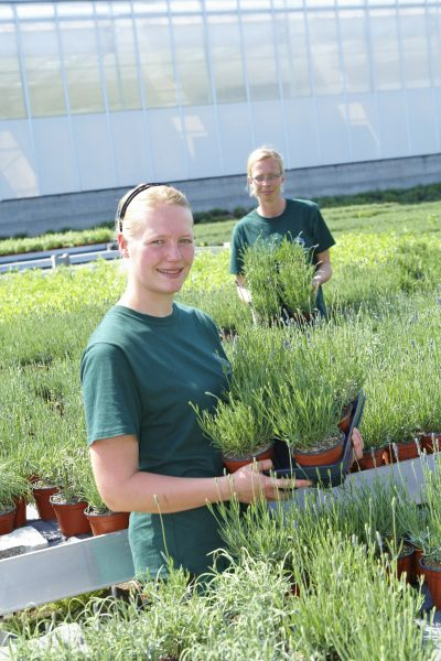 Grüne Berufe: Der Duft des Erfolgs