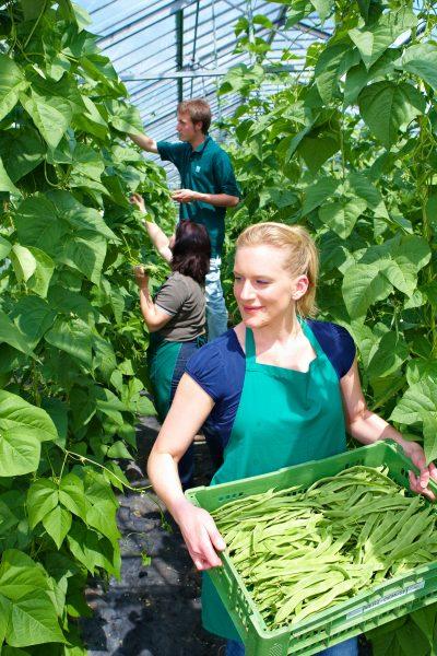 Grüne Berufe: Gärtnern für die Zukunft