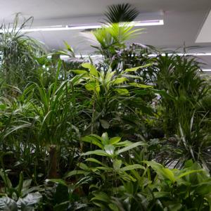 Lagerpflanzen_Dschungel_1